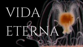 Pequenas águas-vivas e o segredo para a vida eterna