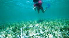 Seagrass: canaries of the sea