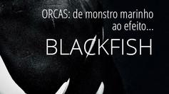 Orcas: de monstro marinho ao Efeito Blackfish