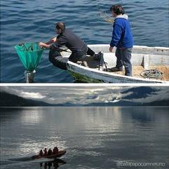 Algas flutuantes: o meio de transporte dos invertebrados marinhos