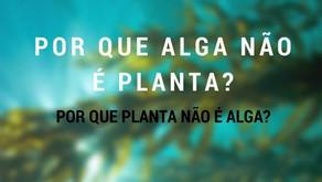 Por que alga não é planta, por que planta não é alga?