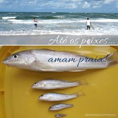 Até os peixes amam praia