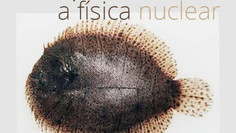 Os peixes e a física nuclear