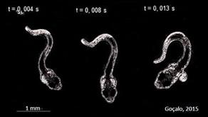 Mais notícias sobre larvas de peixes