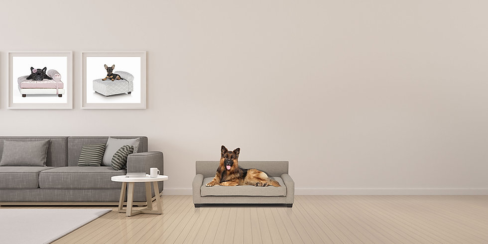 Club Nine Pets Metro Dog Bed