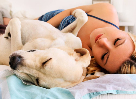 5 Tips that Will Help You Choose the Best Dog Bed