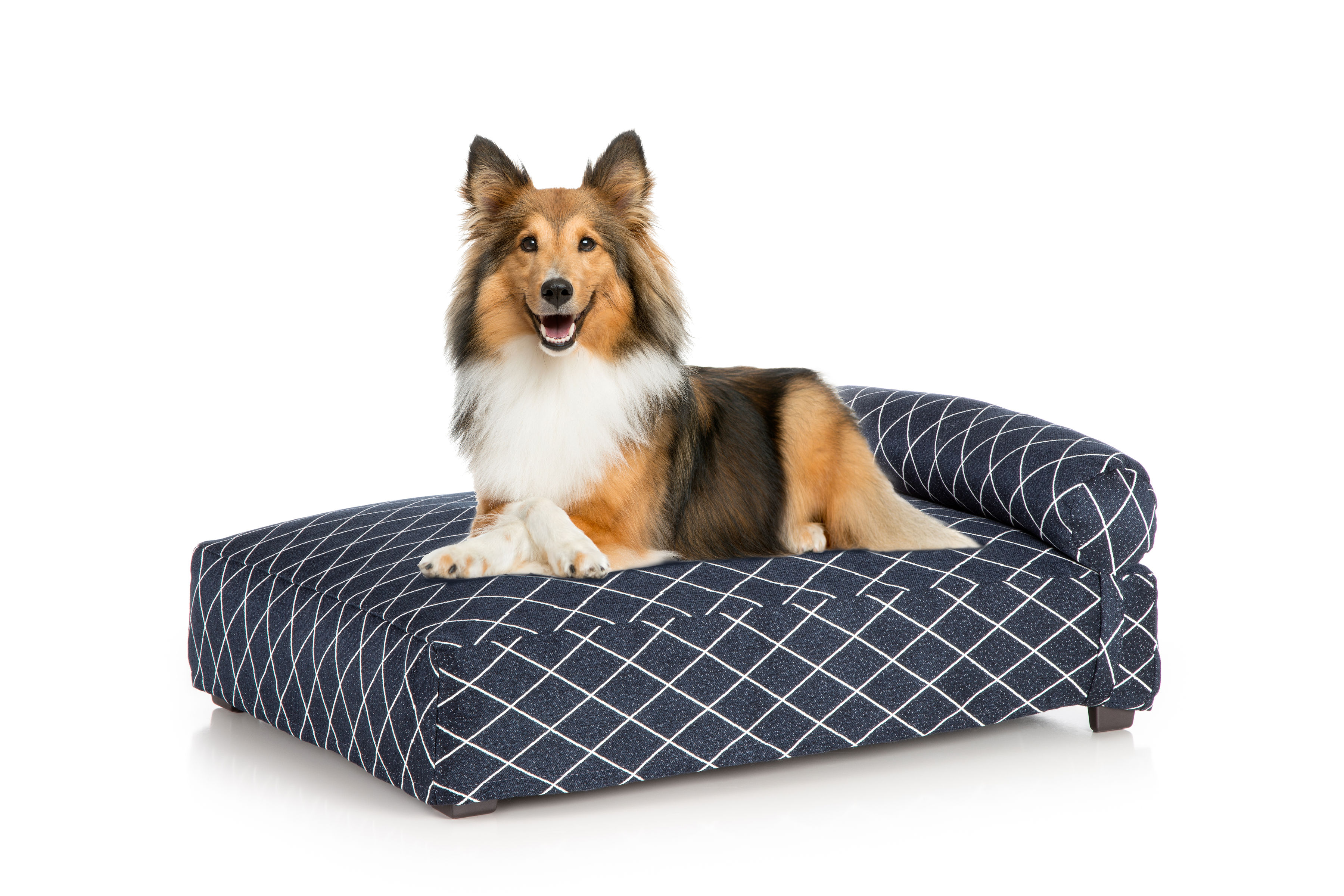 Contempo Dog Bed