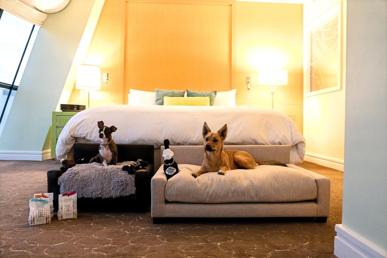 Sofitel Hotel and Club Nine Pets_edited.jpg