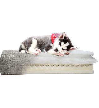 Orthopedic dog bed club nine pets