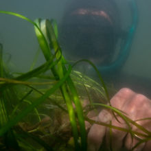 Eelgrass%201_edited.jpg