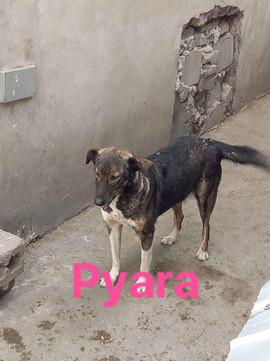 Pyara