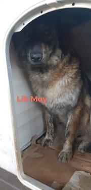 Lili May