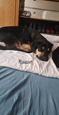 Raizar