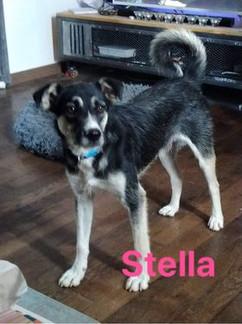 Stella (FA)