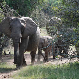 There are dozens of malaria free game reserves to choose from including the awesome Greater Addo Elephant National Park.