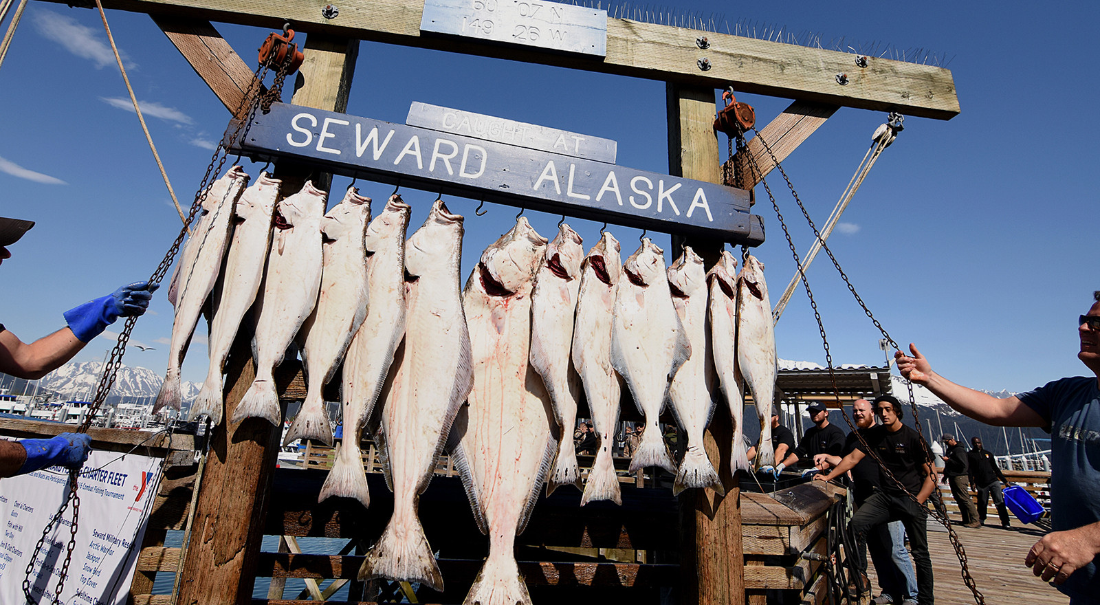 Seward Halibut Catch.jpeg