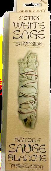 Sauge blanche 6 pouces