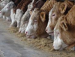 Tierarztpraxis Westmünsterland |  Fresseraufzucht