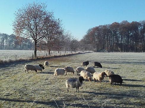 Tierarztpraxis Westmünsterland | kleine Wiederkäuer