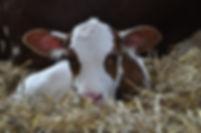 Tierarztpraxis Westmünsterland