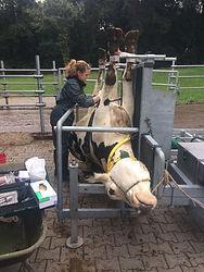Tierarztpraxis Westmuensterland