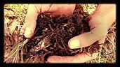 יער מאכל קדרון סדנא
