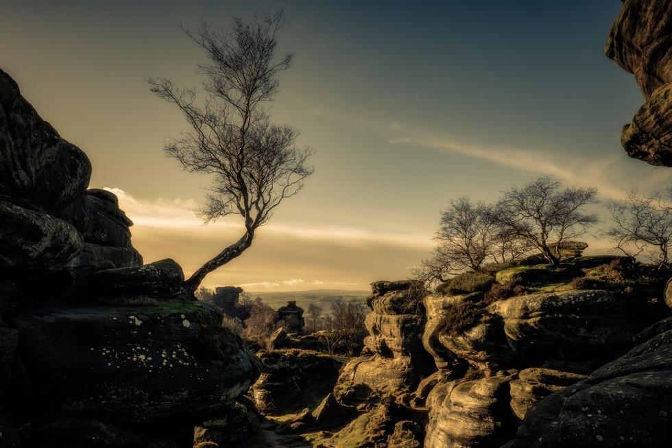 Birch, Brimham Rocks