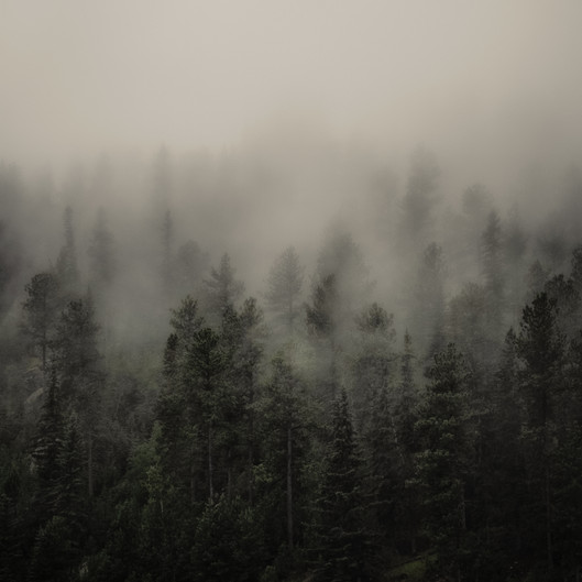 Forest Mist, South Dakota