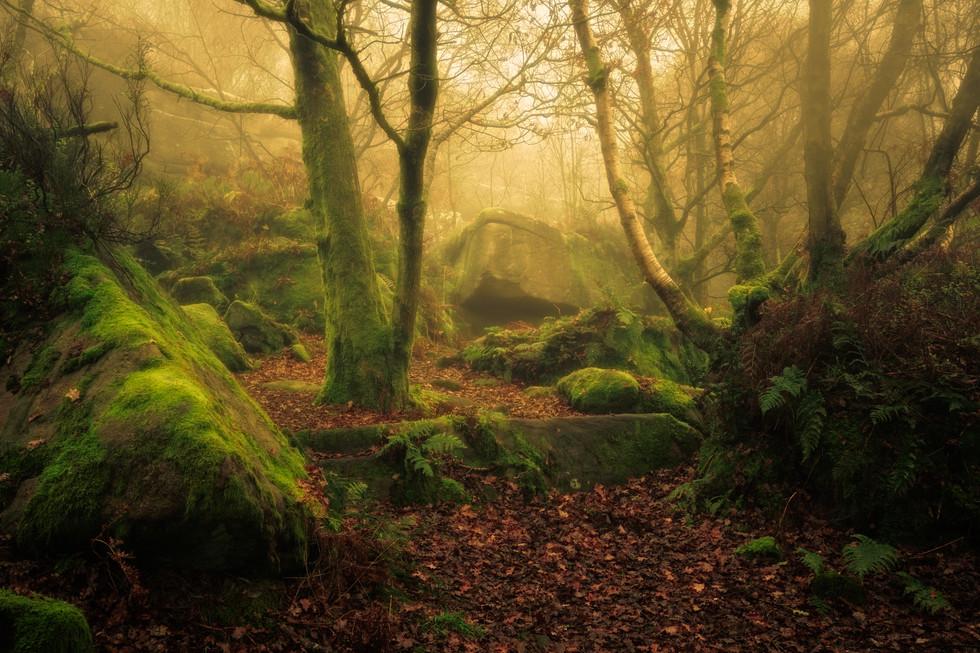 Woods at Brimham Rocks