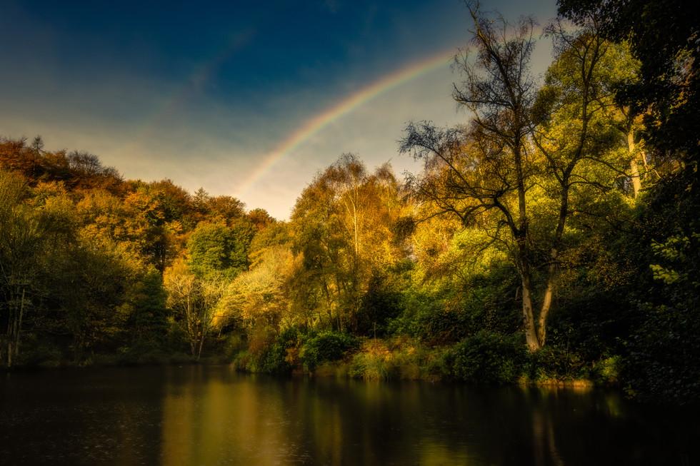 Rainbow, Fishpond Wood