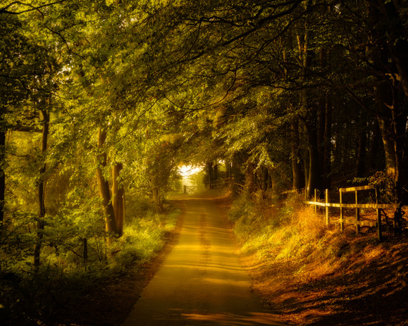 Country Lane, North Yorkshire