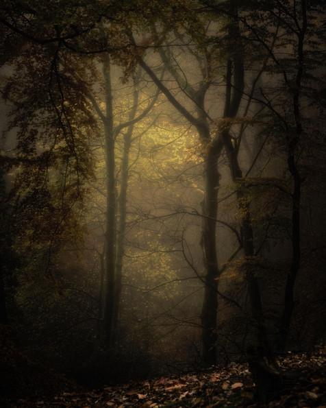 Dark Woods, Nidderdale