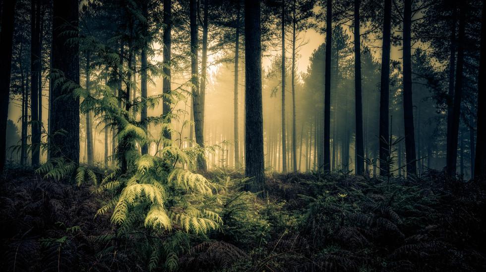 Wheldrake Wood