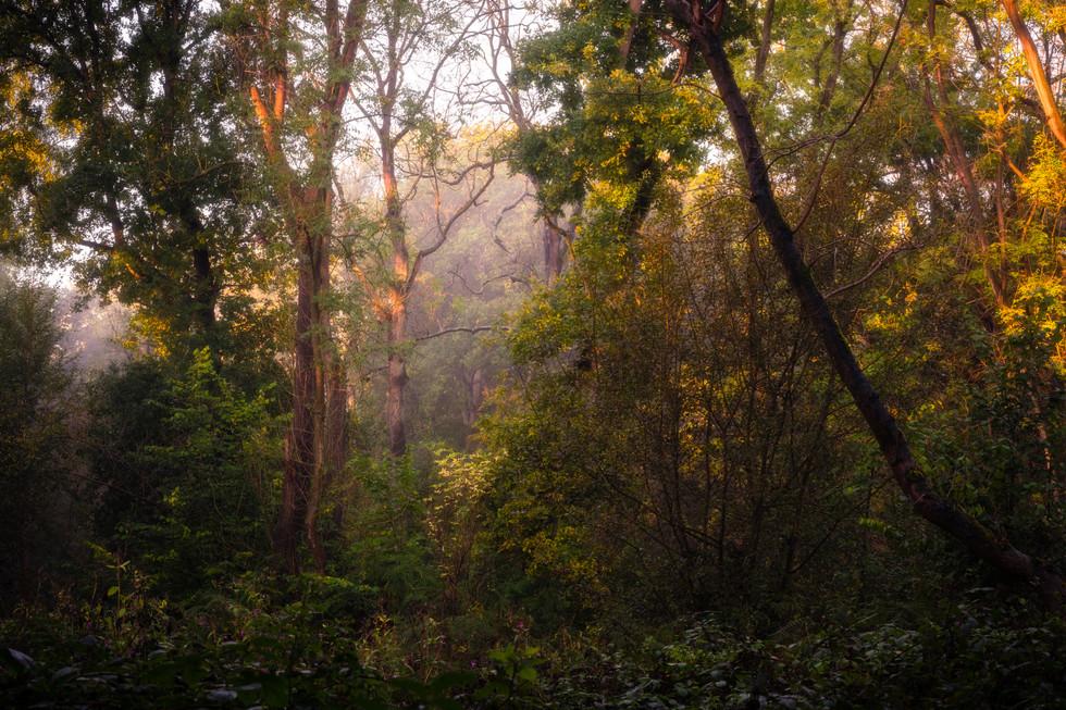 Wild Wood, Knaresborough