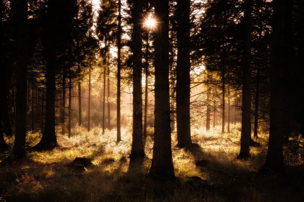 Sunlit Woodland, Timble Ings