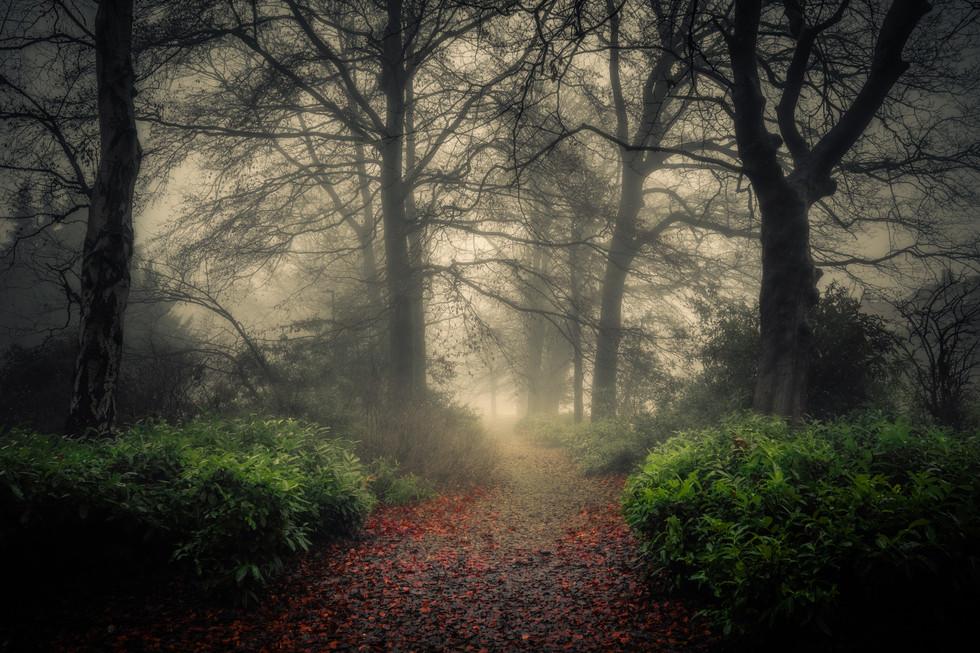 Woodland Path, Harrogate