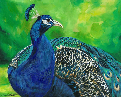 peacock 5x7.jpg