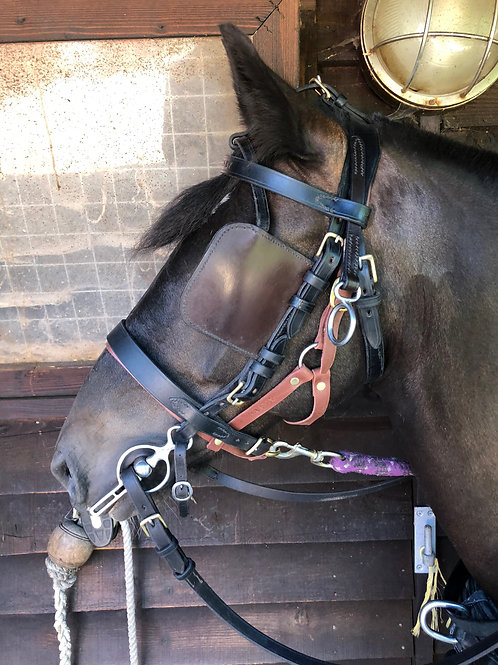 Carriage Driving Under Halters