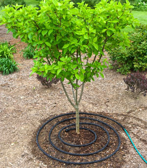 Proper watering of your newly planted trees for the first few years is extremely important!