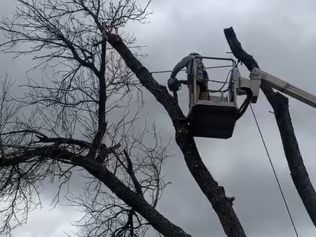 What to look for when hiring a tree care company.