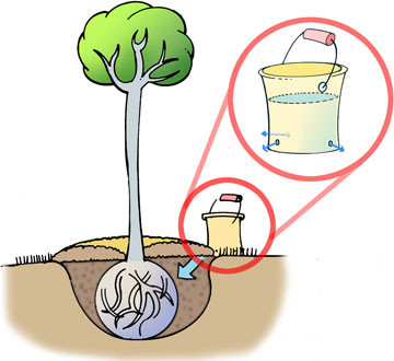 Your new trees need more water than you think!