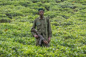 Ugandan Wildlife Officer