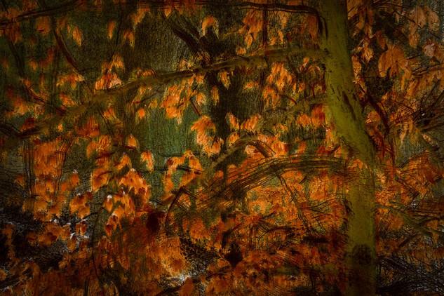 December Beech Tree
