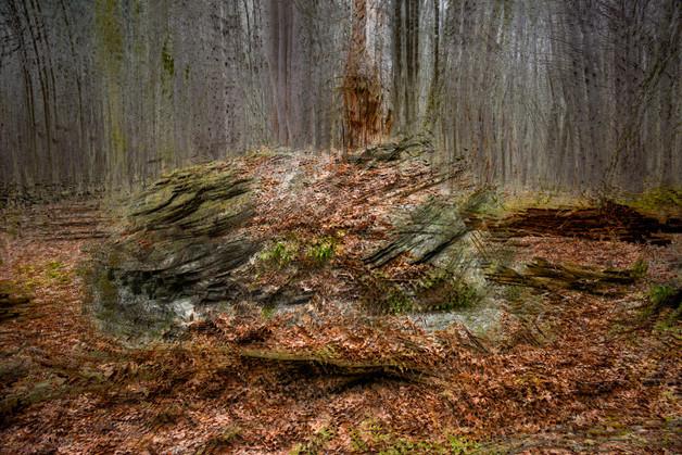 A Glacial Erratic In Estabrook Woods
