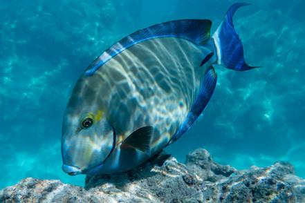 fish003.jpg