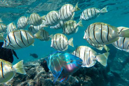 Fish001.jpg