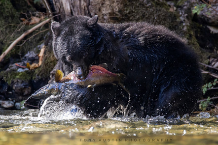 bear010.jpg