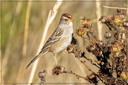 sparrow001.jpg