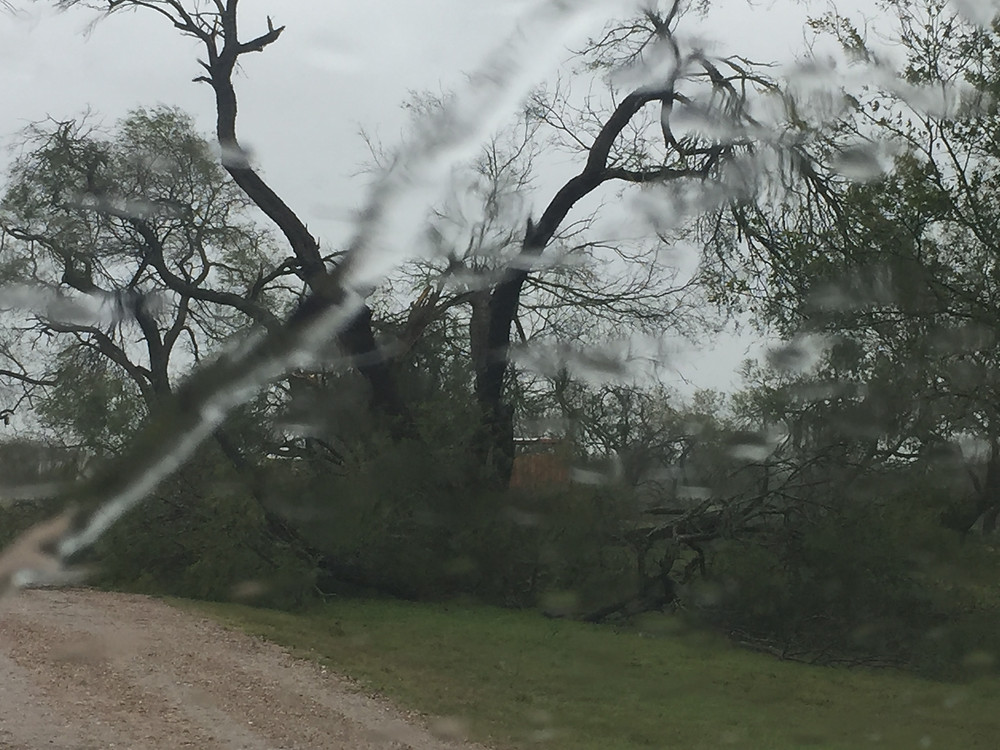 Lots of downed trees at our campground after Harvey