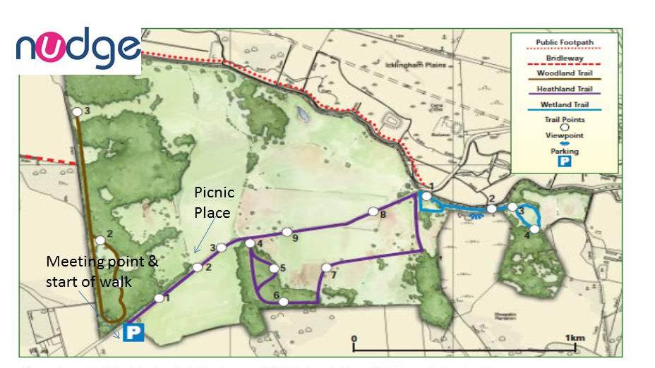 Cavenham Heathland trail walk & picnic CHILD